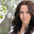 Beautiful young woman face in blooming spring tree — Stock Photo