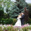 Bride and groom in a green park — Stock Photo