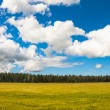 Yellow field and blue sky. — Stock Photo
