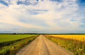Rural road between green and yellow fields. Cloudy sky — Stock Photo