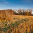 Harvested field with straw bales in autumn — Stock Photo #13614168