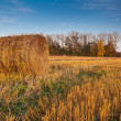 Harvested field with straw bales in autumn — Stock Photo