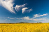 Autumn landscape. Yellow field and blue sky — Stock Photo