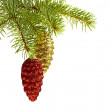 Chraictmas decoration. Golden and red coens on fir tree — Stock Photo
