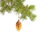 Christmas yellow cone on fir tree isolated — Stock Photo