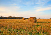 Two rolls of hay on field. Fall. Sunset — Stock Photo