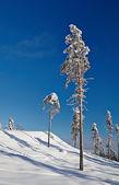 丘の斜面に美しい木と冬の穏やかな風景 — ストック写真