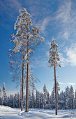 Winter landscape. Winter wood covered with snow. — Stock Photo