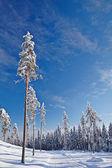 Coperta di neve vuota strada nel paesaggio invernale — Foto Stock