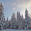 Winter fir-tree forest with snow covered trees and small cabin - Stock Photo