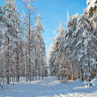 Winter road in the forest in sunny day — Stock Photo