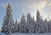 Winter fir-tree forest with snow covered trees and small cabin — Stock Photo