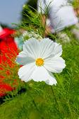 белый цветок — Стоковое фото