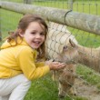 Stock Photo: Child feeding goat