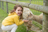Child feeding a goat — Stock Photo