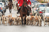 Horses and Hounds — Foto de Stock