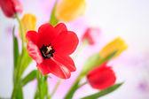 Fiori di primavera — Foto Stock