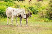 Ezel, moeder en pasgeboren veulen — Stockfoto