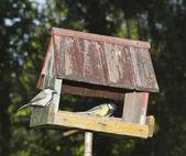 柳雀和大山雀 — 图库照片