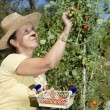 Mid aged woman doing some gardening — Stock Photo