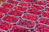 Organic raspberrys on market stand — Stock Photo