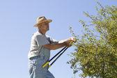 Gardener thinks how to cut hedge — Stock Photo