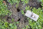 Trampa de ratón en jardín césped — Foto de Stock