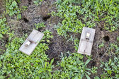 Mouse traps on garden lawn — Stockfoto