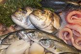 Fresh fishes on fishmarketet — Stock Photo