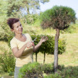 Cute Woman trimming bonsai tree — Stock Photo #28845467