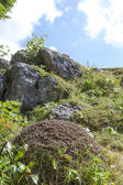 Big anthill in the mountains, close-up — Stock Photo