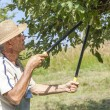 Man trimming the apple tree — Stock Photo
