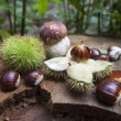 Cep and chestnuts on fresh stump — Stock Photo