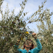 Cute woman harvesting olives — Stock Photo