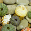 Sea urchin an pebble - Stock Photo
