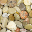 Pebble and sea urchin background - Stock Photo