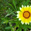 Yellow flower an green grass — Stock Photo