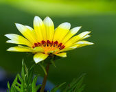 Yellow fower with green background — Stock Photo