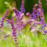 紫色的花 — 图库照片