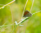 Butterfly outdoor — Stock Photo