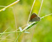Motyl na zewnątrz — Zdjęcie stockowe