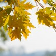 Autum n leaves — Stock Photo