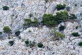 Tree on mountain wall — Stock Photo