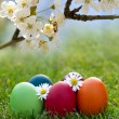 Colorful Easter egg in the fresh spring grass — Stock Photo