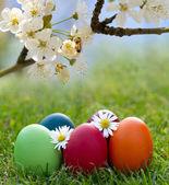 Ovo de Páscoa coloridos na erva fresca da Primavera — Fotografia Stock