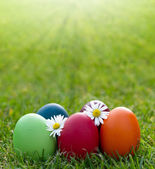 Colorful Easter egg in the fresh spring grass — Foto de Stock