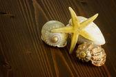 Starfish and seashell — Stock Photo