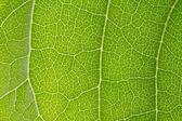 葉のテクスチャー — ストック写真