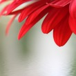 Red flower — Stock Photo #9372456