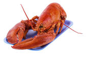 Cooked lobster — Stock Photo